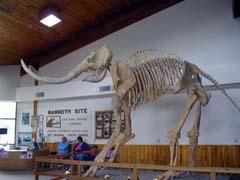 Mammoths!