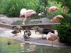 Flamingos again!