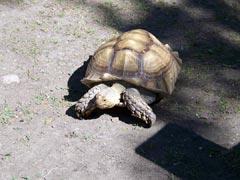 I'm not slow!
